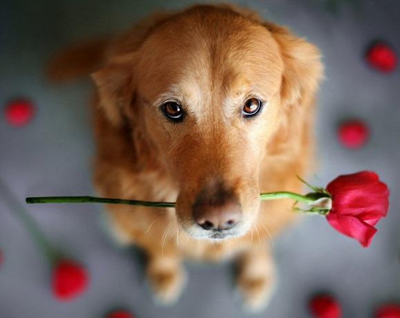 Какво значи породата куче